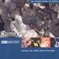 THE ROUGH GUIDE TO..-SAMBA