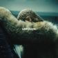 BEYONCE:LEMONADE (CD+DVD) -IMPORTACION-